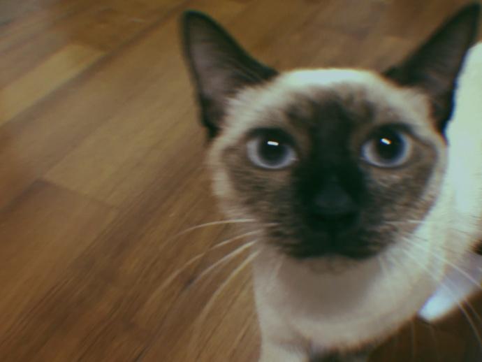吴宣仪站台阶比耶凹造型 晒自己与爱猫钥匙链萌翻网友