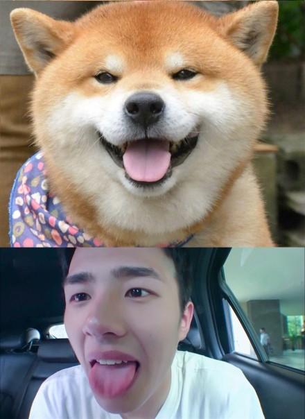 高清套图:刘昊然撞脸柴犬 表情几乎一模一样