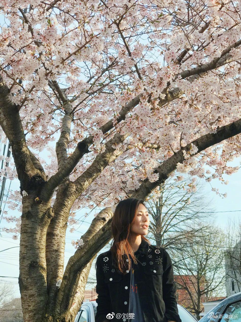 高清套图:刘雯樱花树下拍美照 美景美人相映成趣