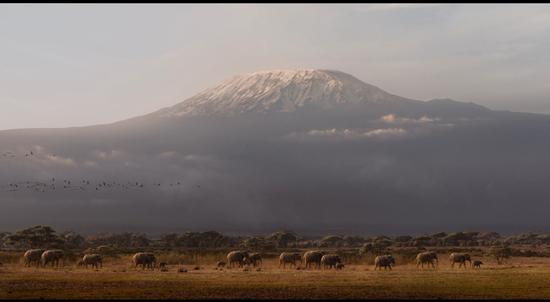 揭秘《狮子王》:开创VR拍摄复刻非洲草原