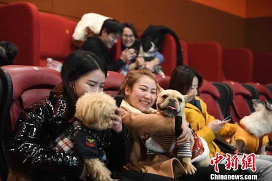 《小狗奶瓶》温情延续 市民带萌宠走进杭州影院