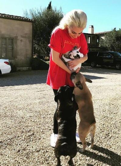 Lady Gaga爱犬已被追回 枪击案嫌疑人仍未抓捕