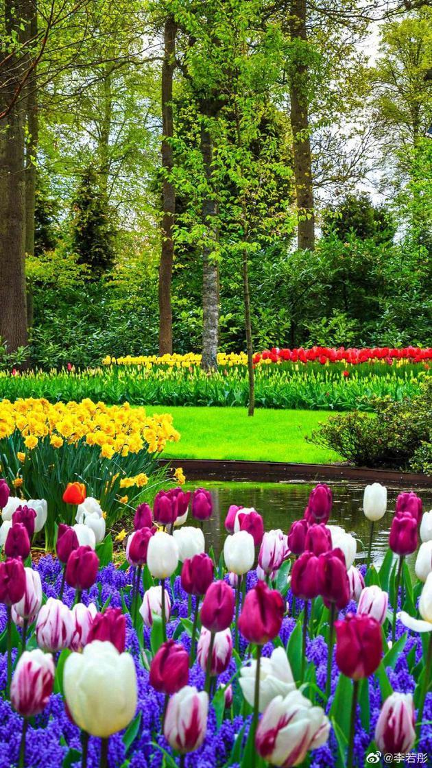 李若彤感谢生日祝福 许愿未来如花灿烂如树茁壮