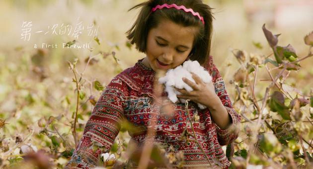 凯丽采摘棉花
