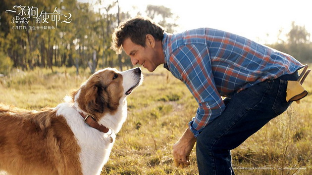 電影《一條狗的使命2》海報