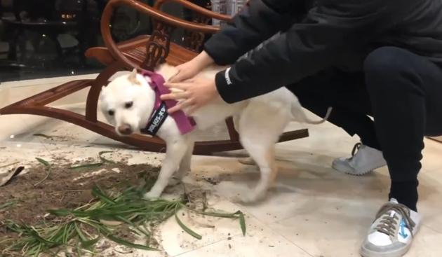 吴磊教育狗狗