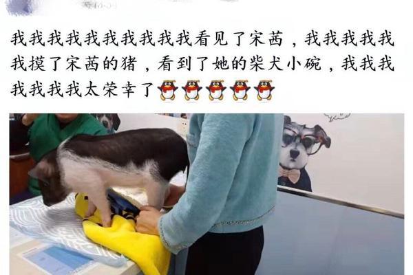 """组图:宋茜带宠物猪现身医院被偶遇 网友透露:""""小八""""的脚崴了"""