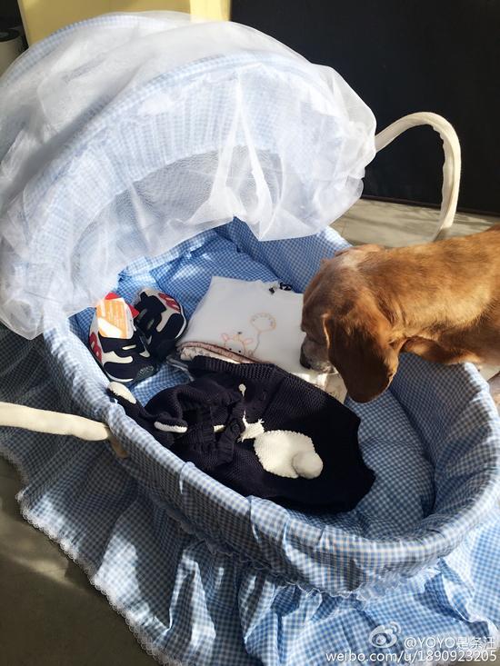 张梓琳爱犬的微博图片中带有婴儿的图片