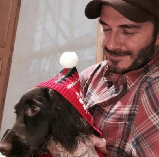 贝克汉姆抱爱犬