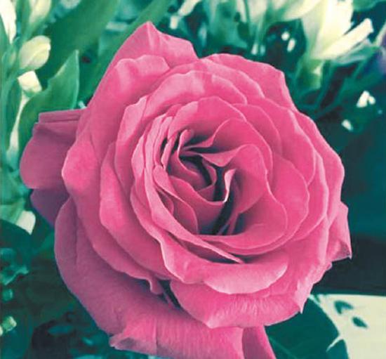 邓丽欣上周三曾上载花的照片,似乎当时情已逝。