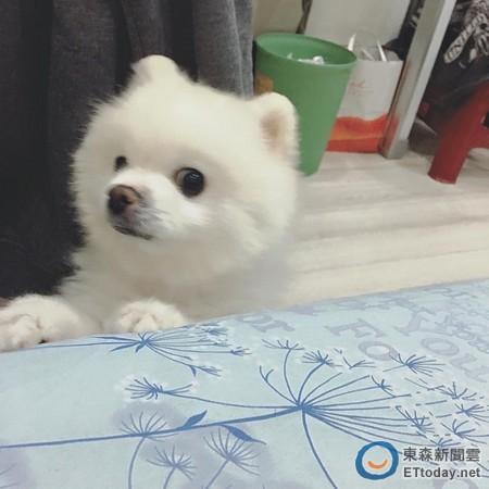 偷看徐佳莹换衣服的凶手是她的宠物狗弟宝