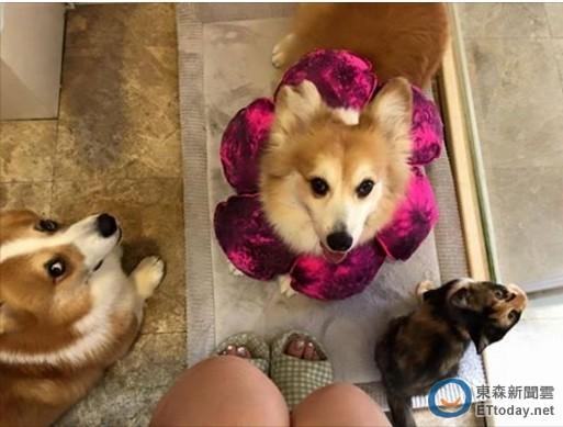 邵庭早起上厕所 三只宠物仍紧跟着她进去