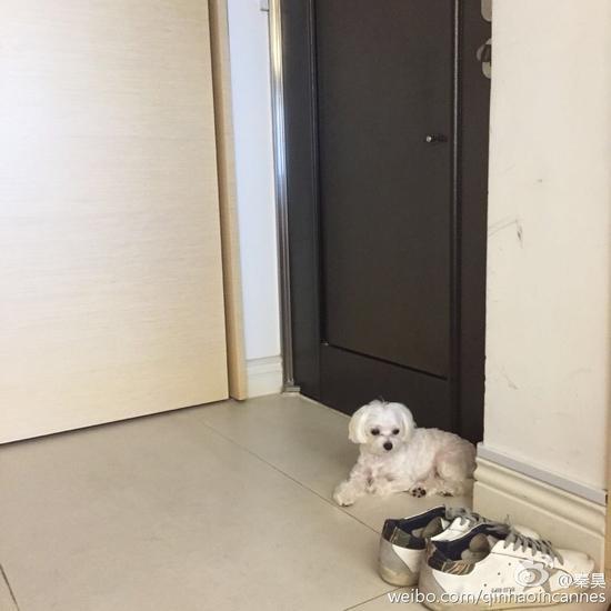 狗狗蹲在门边