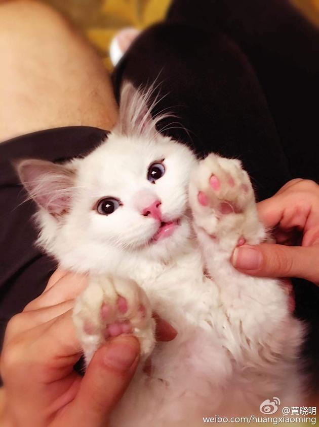 黄晓明、baby牵手爱猫