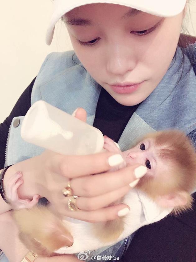 葛荟婕给幼猴喂奶