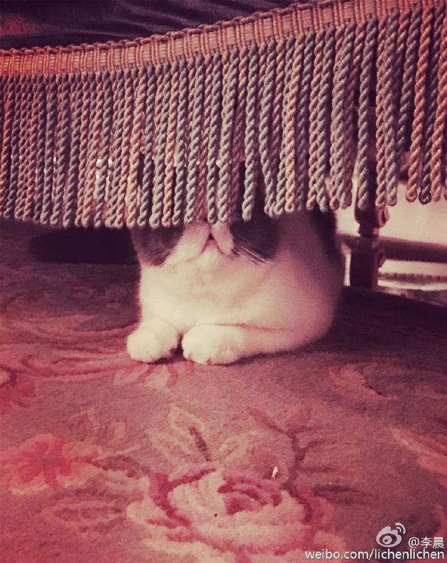 范冰冰爱猫钻进窗帘