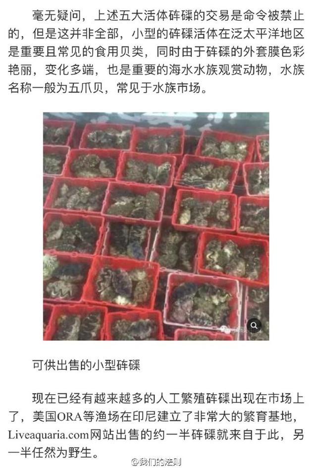 小型砗磲是常见的食用贝类