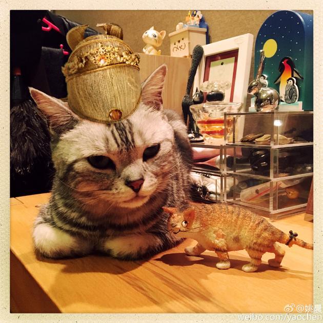 姚晨家的猫