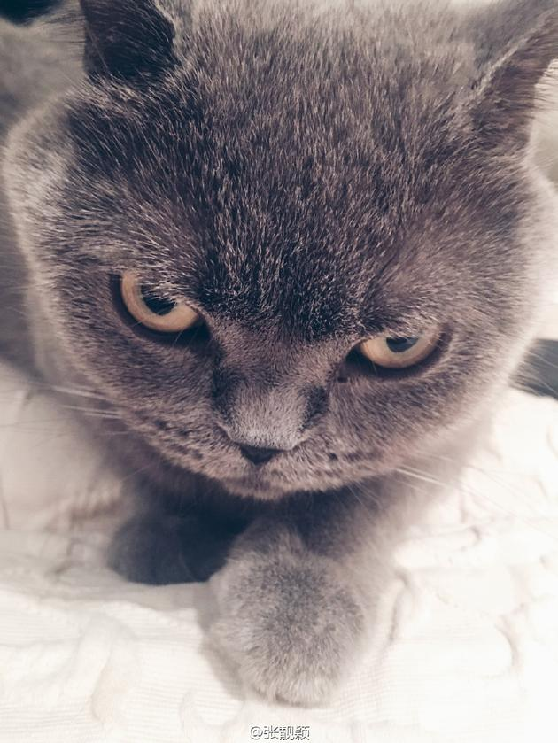 张靓颖晒猫咪