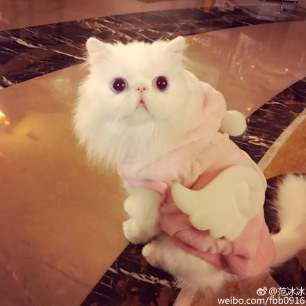 范冰冰爱猫