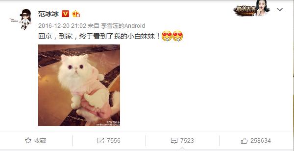 范冰冰曾在微博晒出爱猫小白