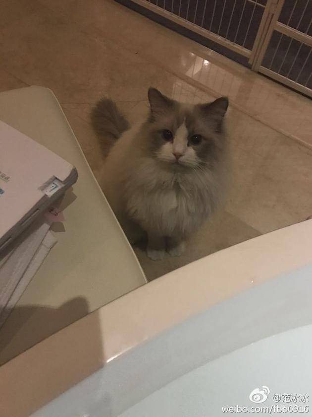 范冰冰在泡澡逗猫
