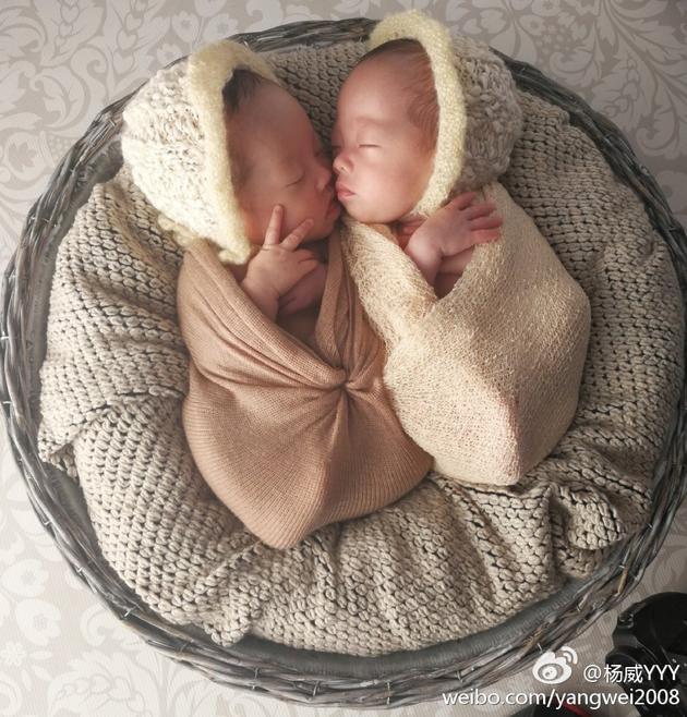 杨威双胞胎女儿似小天使