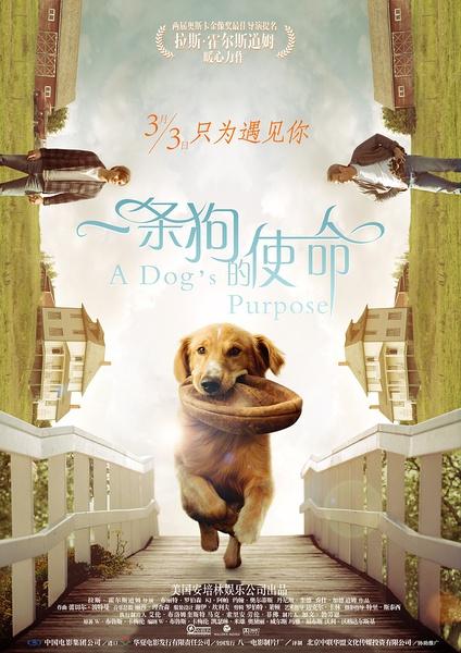《一条狗的使命》