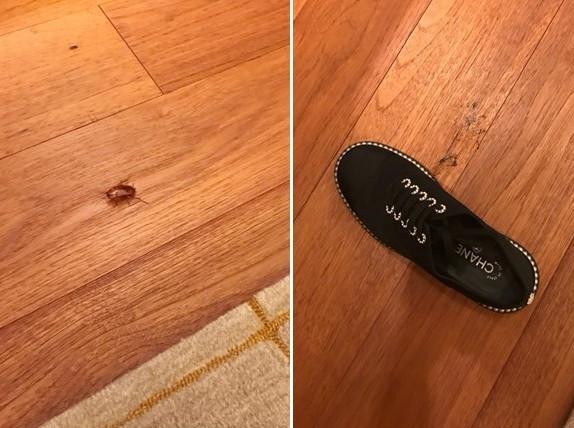 蟑螂死于名牌鞋下