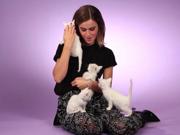 艾玛沃森跟6只小猫一起访问萌翻网友。