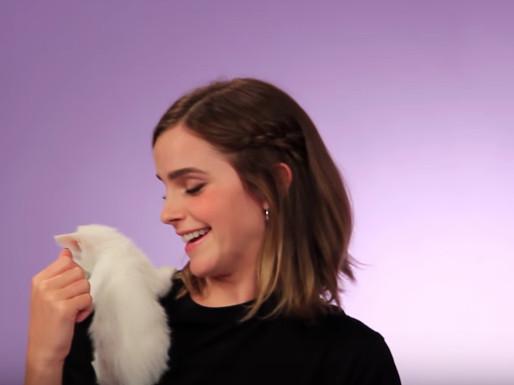 小猫把艾玛沃森的身体当作游乐园,直接倒挂在肩膀上面玩乐。