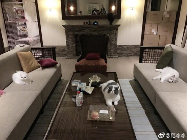 范冰冰凌晨收工爱猫迎接 称一回酒店就被认真对待