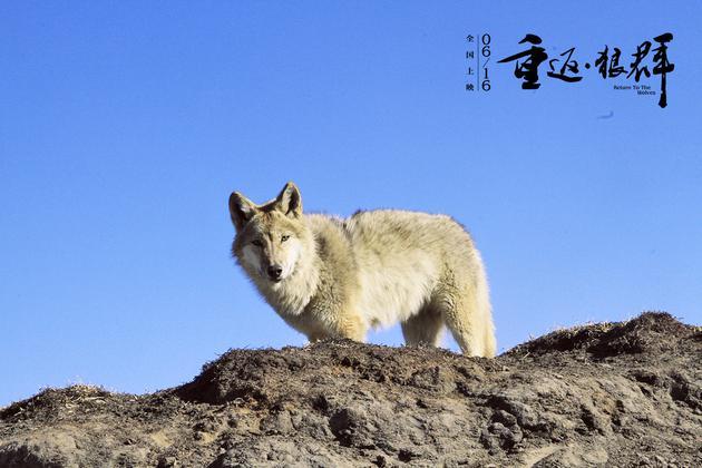 《重返·狼群》剧照 格林图片