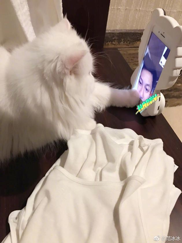 范冰冰爱猫和李晨视频