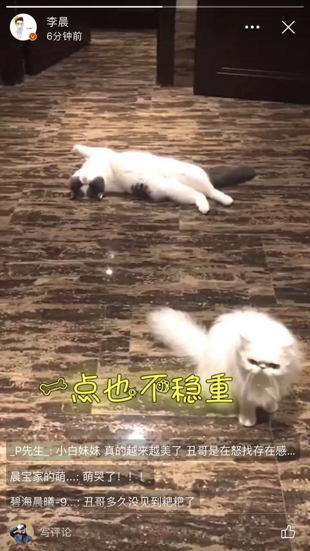 李晨又晒冰冰爱猫 网友:你们快结婚吧
