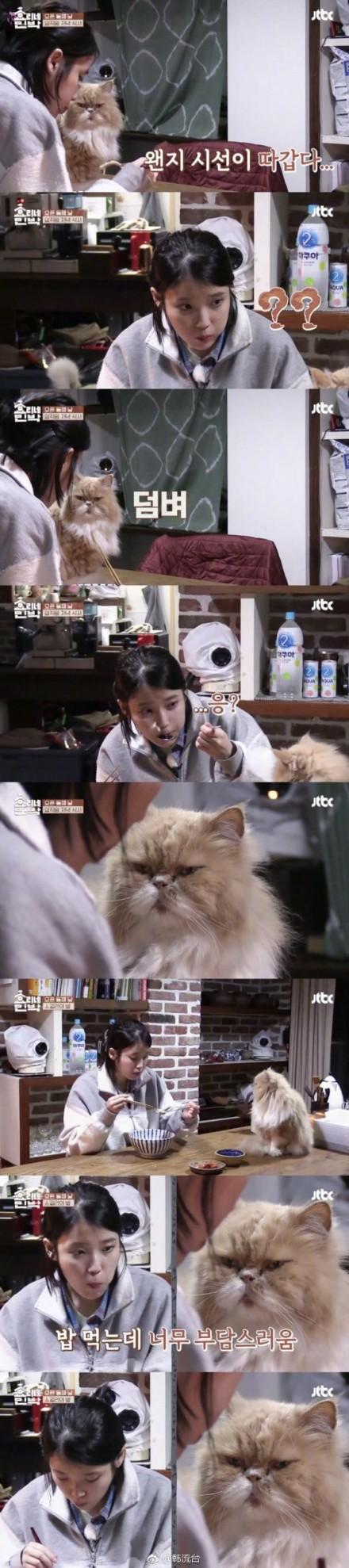 一脸懵与一脸萌!IU与李孝利爱猫互盯场面有爱
