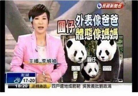 大S将熊猫类比女儿:发质像妈妈瞳孔像爸爸
