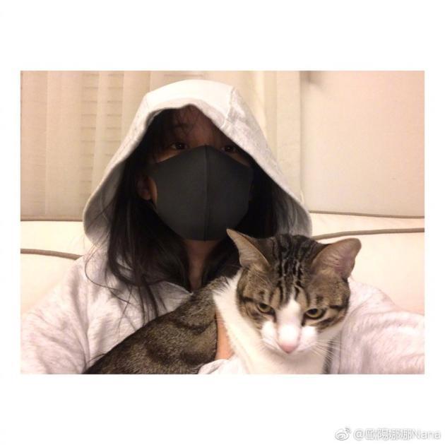 实力猫奴!欧阳娜娜全副武装不惧过敏也要撸猫