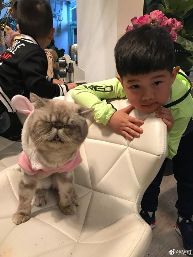 安吉小鱼儿和萌宠猫咪合影 网友担心沙溢家中地位