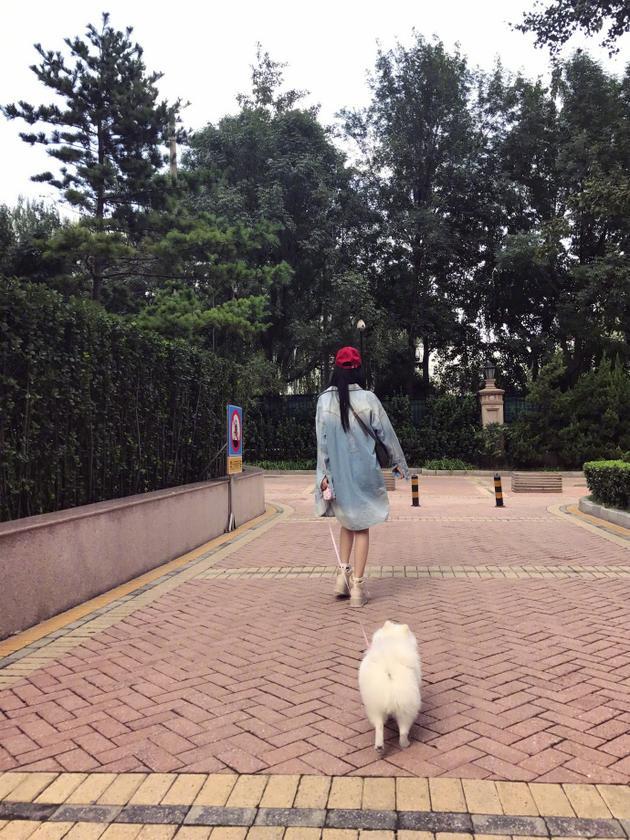 张馨予遛狗