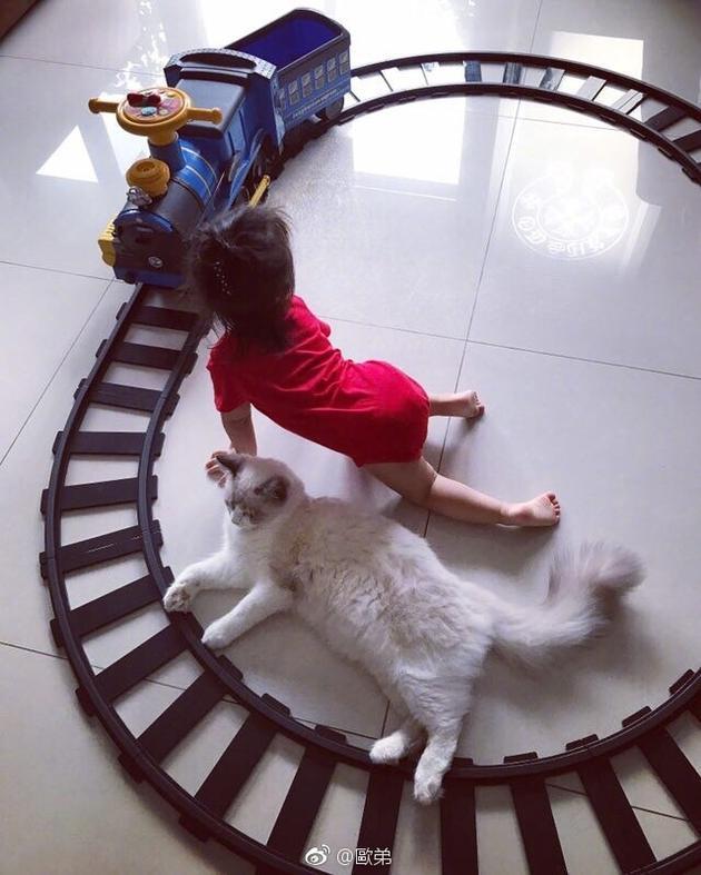 欧弟女儿jojo跟喵咪玩