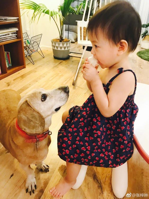 张梓琳晒女儿照道晚安 胖妹吃点心呆萌惹小狗凝视
