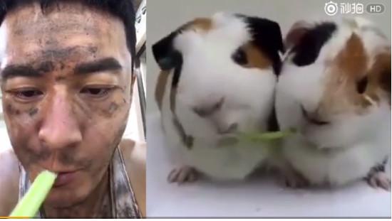 黄晓明啃菜神似荷兰猪 baby:吃草也胖