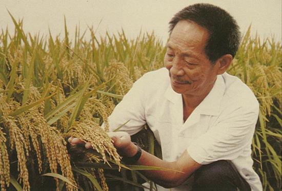 《故事大会》陈伟鸿讲述袁隆平的海水稻之梦