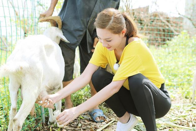 郑希怡学习挤羊奶