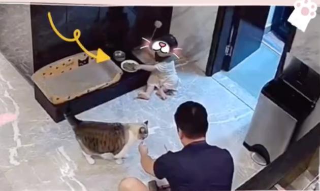 安以轩吐槽老公让孩子误食猫粮:爸爸带娃活着就好