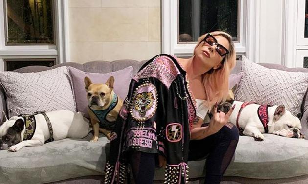Lady Gaga遛狗员遭枪击伤势严重 两只爱犬被抢
