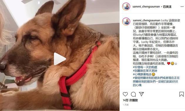 郑秀文担忧爱犬状况 感性发文:别离就在某天某时