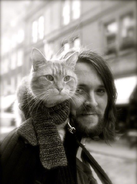 命运充满了起伏和跌宕  流浪猫鲍勃去世