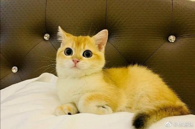 杨超越爱猫走丢发微博求助:只求平安不要流浪街头